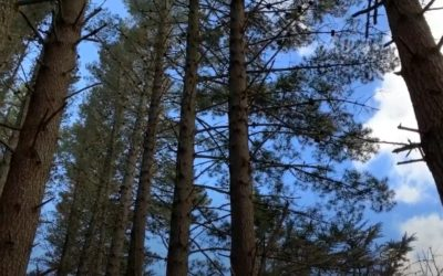 Edge Trees – An Important Consideration for Forest Inventory