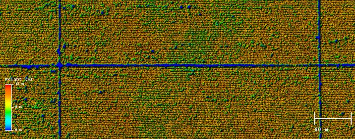082815_0048_lidarcanopy2