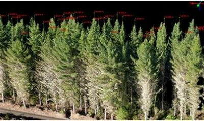 Using Drones / UAV for 3D Modelling Forest Tree Structure