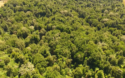 Potential of Using UAV / Drones for Pest Control ?