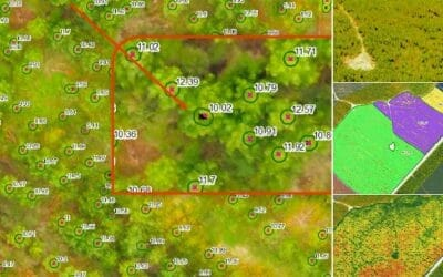 Completing Thinning Silvicultural Inventory Using Drones / UAV