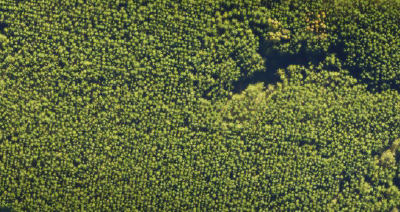 Forest Canopy Mapping – what can be achieved