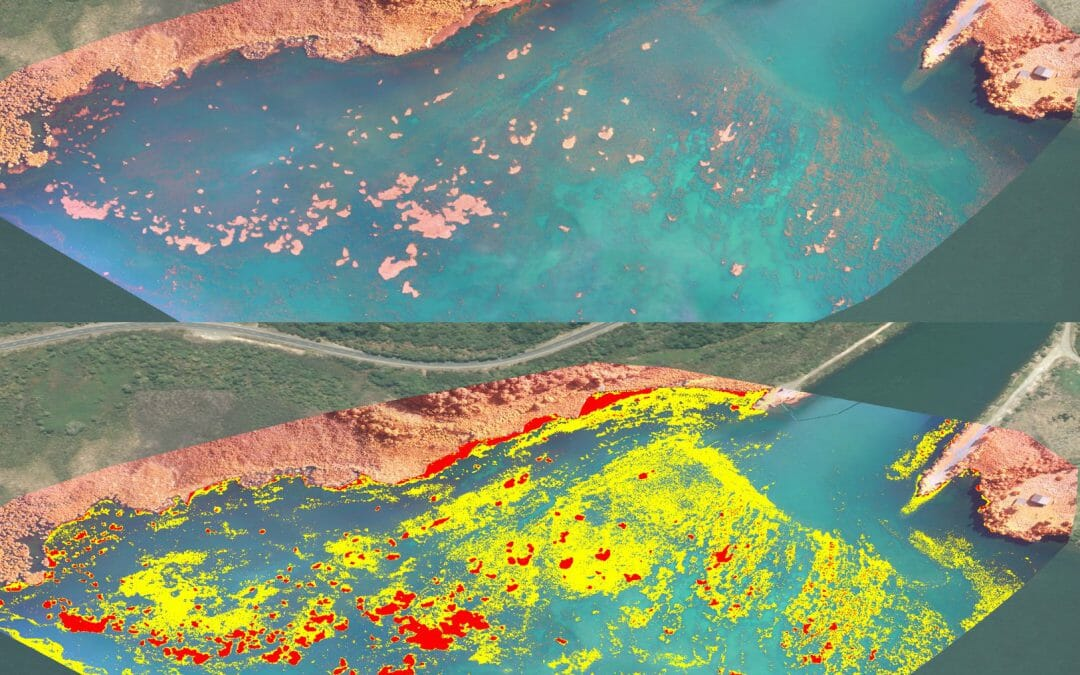 Multispectral Mapping of Invasive Aquatic Weed Using Drones / UAV