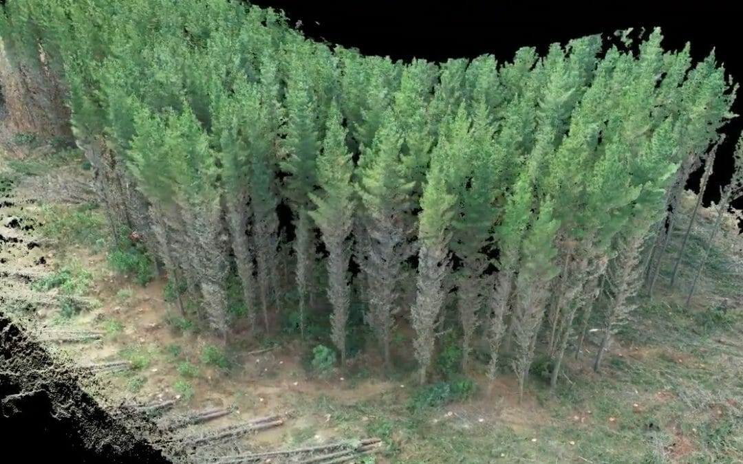 3D Modelling Forest for Harvesting Productivity Studies