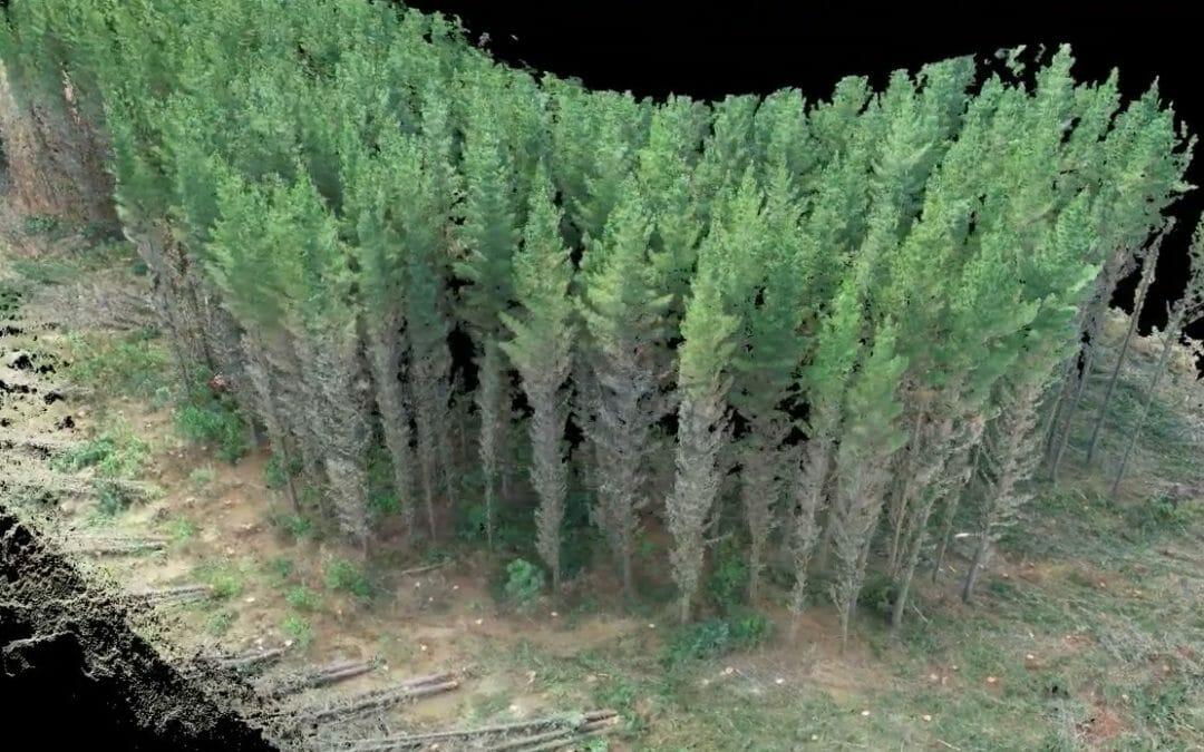 3D Modelling Forest for Harvesting Productivity Studies