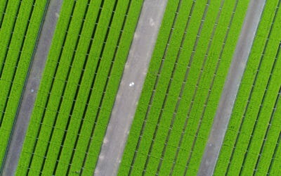 Conducting Tree Nursery Seedling Inventories Using Drones