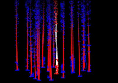 Interpine LiDAR Forest Inventory Tree Profile Extraction