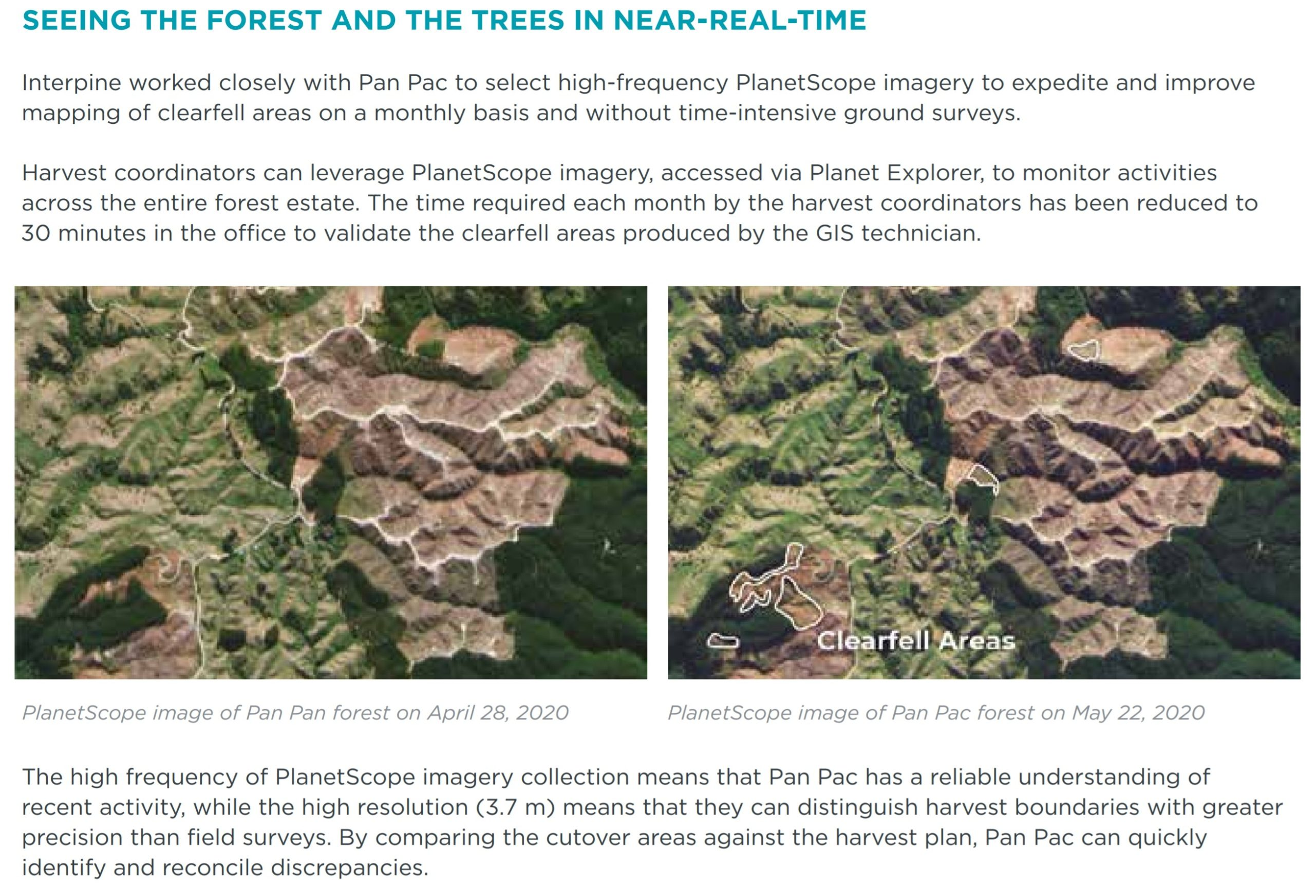 Seeing the Forest in Near Real Time