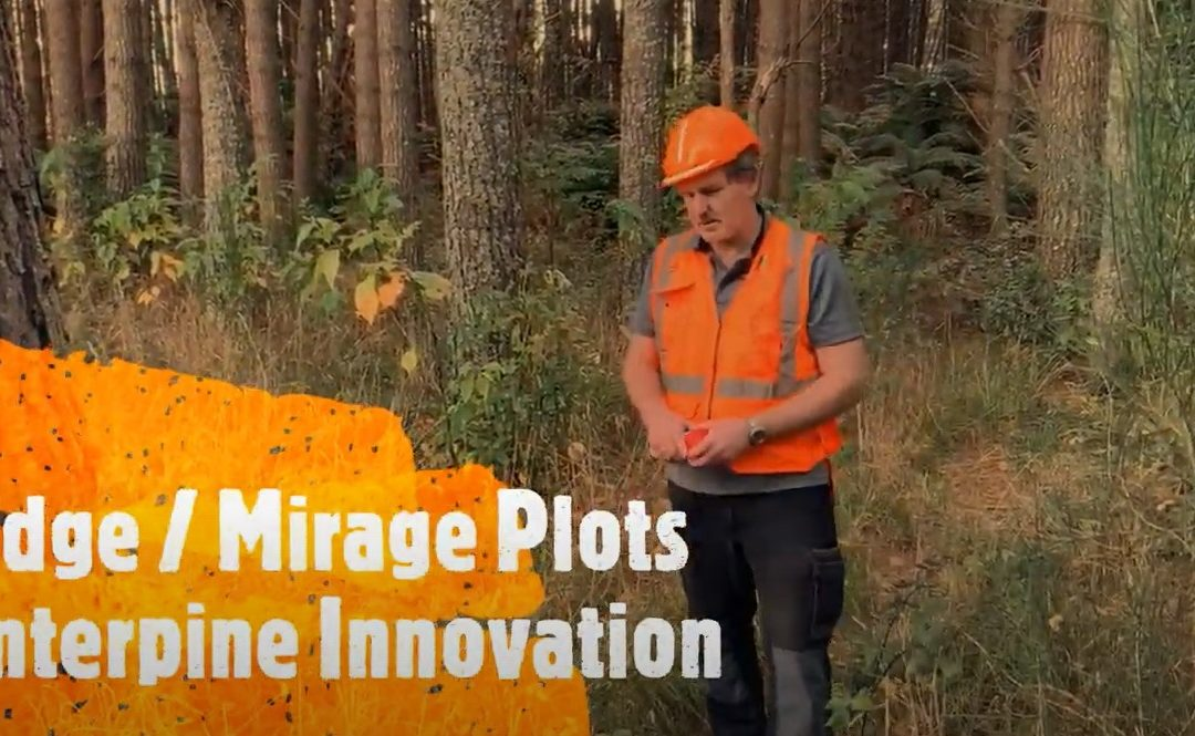 Mirage Edge Plots for Forest Inventory