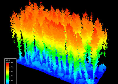 3S LiDAR Scan Radiata Pine 50m Tall