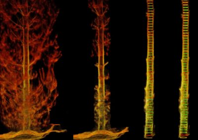 Hovermap LiDAR Young Radiata Pine