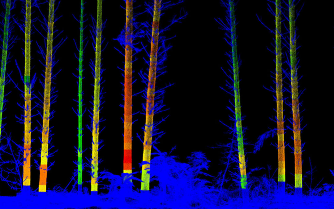 Ultra dense LiDAR Scans for Forest Measurement