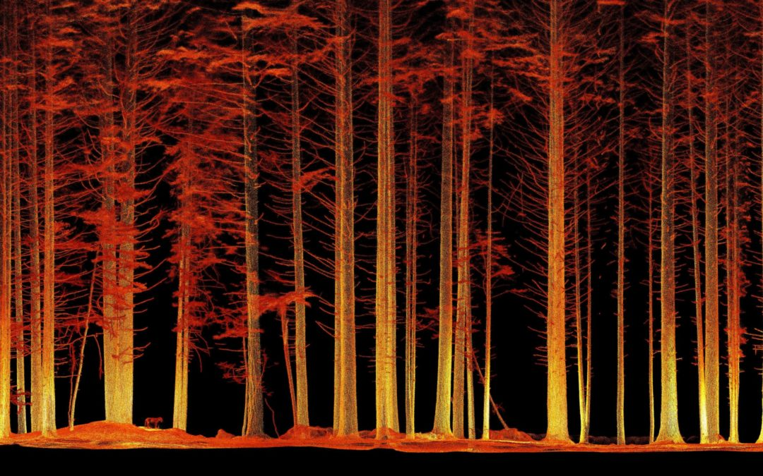 Redwoods A Walk Upon The Trees with LiDAR Hovermap
