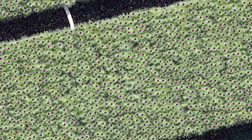 Forest Nursery Tree Seedling Counts Using Drones