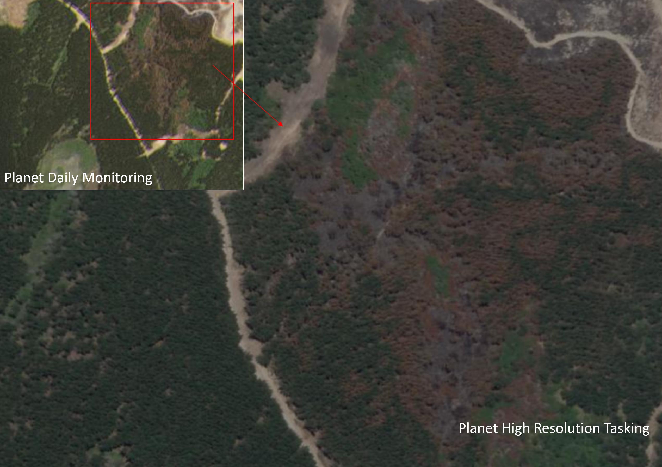 Planet SkySat Forest Fire