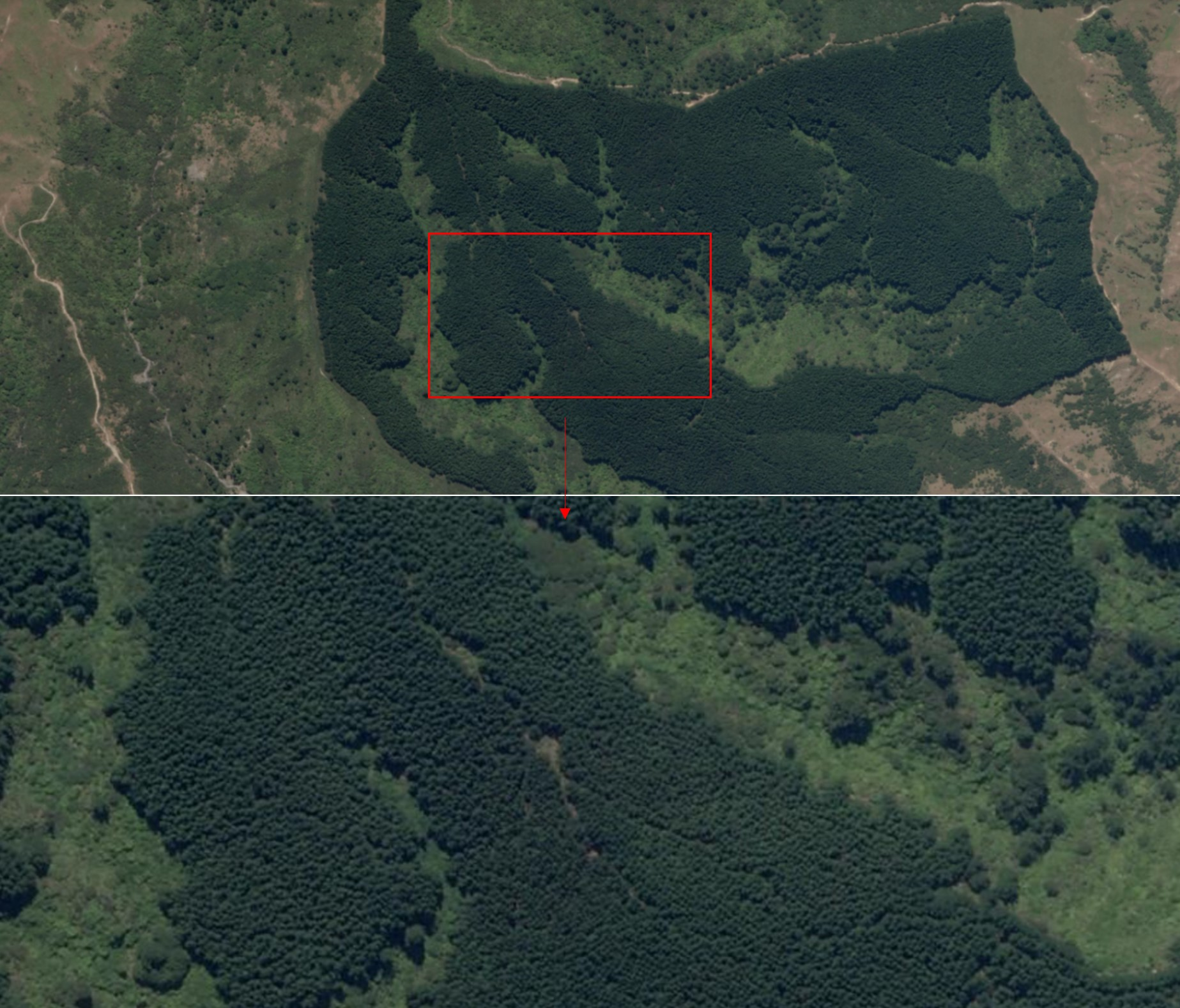 Planet SkySat Mature Forest Remapping 3